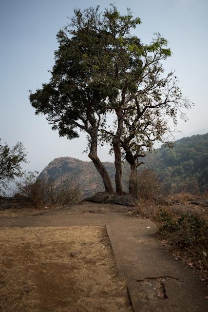 Wild Mysore