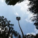 Wild Mysore - Ooty Botanical Gardens