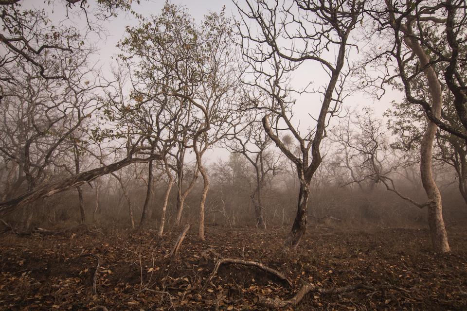 Birds of india: Pavo cristatus
