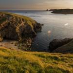 Puffins In Pembrokeshire - Skomer